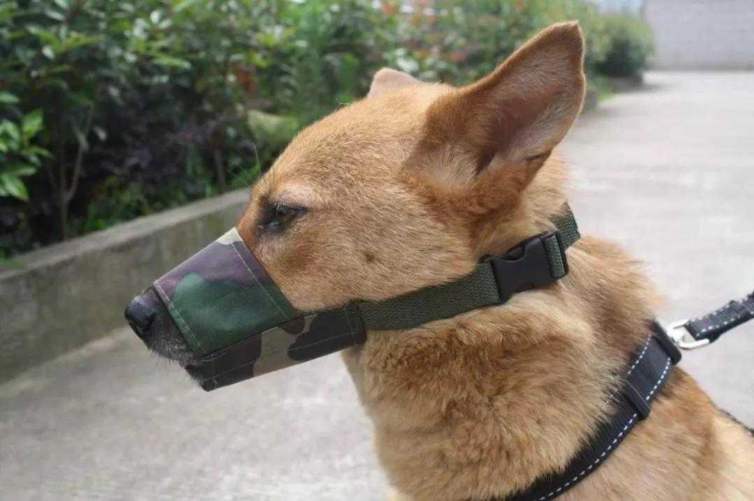 最高罚5000元!10月19日起,这些品种犬只绍兴全市禁养