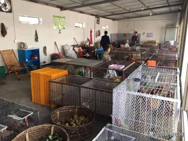 巡查发现嵊州农贸市场的活禽交易区有人擅自开门营业,销售活禽!