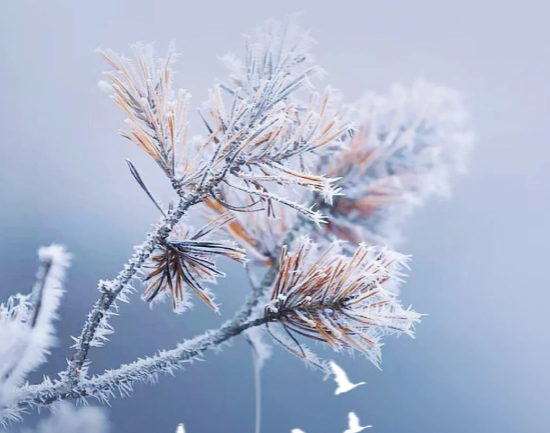 中梁·越江府|霜降