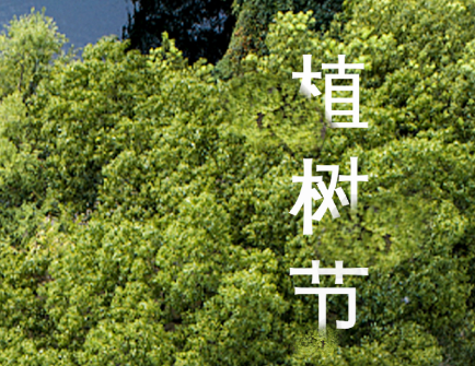 勤业阳光龙庭 植树节  一树年轮  一城风景