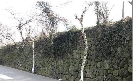 【新昌】全长约650米,造价约387.6万元,新昌老城墙将修缮!